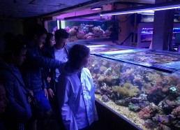 Des bassins pour faire grandir les coraux