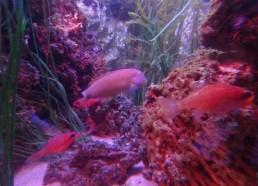 De très beaux poissons