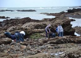 Les Matelots inspectent sous les rochers