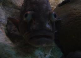Aquarium Bonifacio