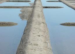 Un pont entre les oeillets