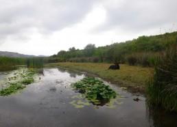 Un étang au milieu des Agriates