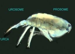 Expériences sur le plancton
