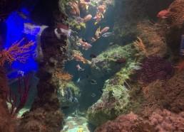 Visite matinale de l'Aquarium de La Rochelle
