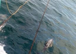 Les dauphins sont là !!!