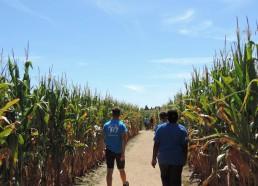 Les Matelots dans le labyrinthe de maïs