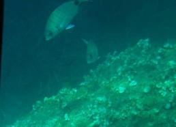 Une biodiversité marine riche