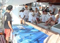 Exposition sur les requins et raies de Méditerranée