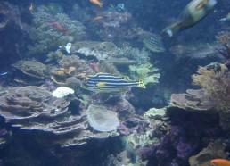 Un Seaquarium tout en couleurs