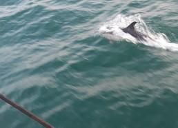 Les dauphins nous escortent