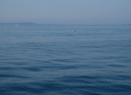 Les premiers dauphins repérés par Mathéo