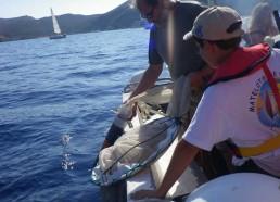 Mise à l'eau du filet à plancton