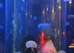 Au milieu des méduses