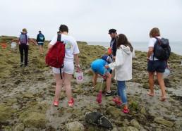 Ramassage des déchets et découverte de l'environnement marin