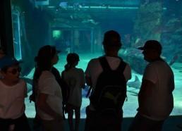 Les matelots face au bassin aux requins