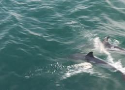 L'arrivée des dauphins