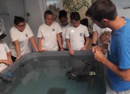 Maxence, animateur du CESTMed, présente les tortues aux Matelots