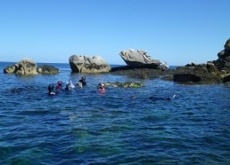 Ils ont pu observer des alevins, vieilles, algues, oursins...