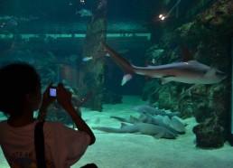 Bassin aux requins